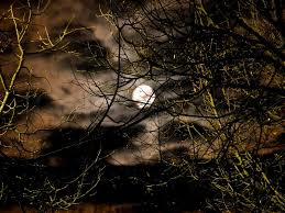 moon and clouds through the trees branch stock photo colourbox