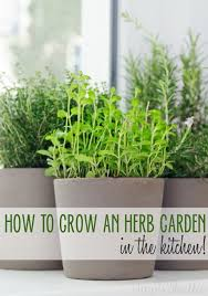 Indoor Herb Garden Kit Australia - best 25 potted herb gardens ideas on pinterest herb pots patio