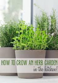 Herb Window Box Indoor Best 25 Kitchen Herb Gardens Ideas On Pinterest Kitchen Herbs