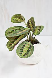 Plants For Dark Rooms by Six Houseplants You U0027ll Find It Really Difficult To Kill