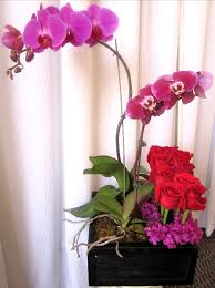 Purple Orchids Orchid And Rose Modern Arrangement