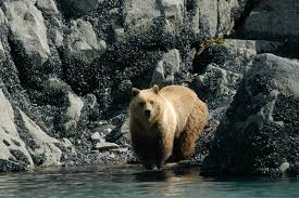 best alaska wildlife viewing experiences