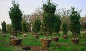 a word from our sponsors now is the time to buy trees at arbor