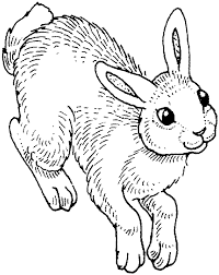nice cute rabbit coloring pages rabbit lovers