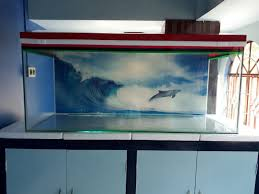 150 Ft In M by This Is My New Fish Tank With The Size Of 5 Ft 2 Ft 2 Ft