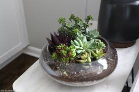 Low Light Succulents by The Best Indoor Plants And How To Keep Them Alive And Thriving