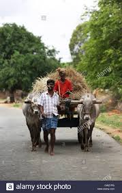 indian cart indian men with bullock cart andhra pradesh south india stock