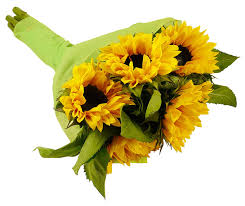 sunflower bouquets benchmark bouquets yellow sunflowers no vase