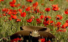 ANZAC SERVICES IN THE SHOALHAVEN - 949 Power FM