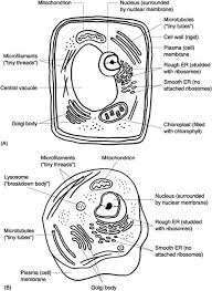 77 cell coloring page cell coloring pages animal and plant cell