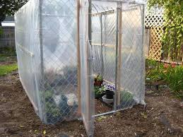 greenhouses forum my dog kennel greenhouse garden org
