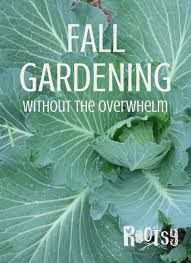 fall gardening without the overwhelm rootsy network