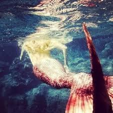 92 mermaid inspiration images mermaid lagoon