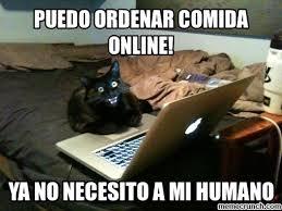 Evil Cat Meme - cat