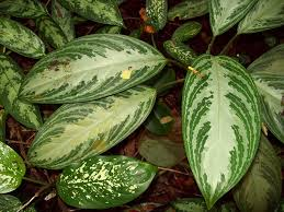 List Of Tropical Plants Names - list of garden plants in the philippines u2013 garden ftempo