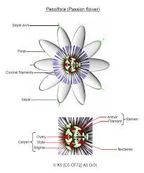 Style Flower Part - flower biology