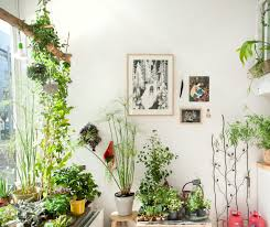 Interior Garden Plants by Bohemian Homes Photo Indoor Gardening Pinterest Bohemian