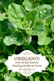 Kitchen Herb by 632 Best Images About Garden Herbs On Pinterest Plants