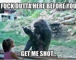 Funny Gorilla Memes - gorilla zoo imgur