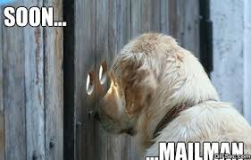 Waiting Meme - meme the dog is waiting viral viral videos