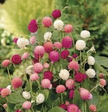 26 best flowers for the garden images on pinterest perennials
