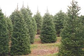 about evergreen valley christmas tree farm evergreen valley