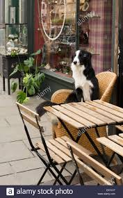 border collie dog sitting in wicker chair watching the world go by