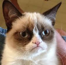 Meme Generator Grumpy Cat - meme generator angry cat image memes at relatably com