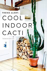 trend alert cool indoor cacti indoor cactus cacti and indoor