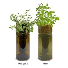 Window Sill Herb Garden by Growbottle Indoor Herb Garden Kit Wine Bottle Planter