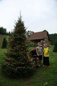 fir heavens sake christmas tree farm nc choose u0026 cut christmas