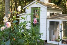backyard chickens and fleas tilly u0027s nest