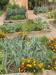 Garden Allotment Ideas Stunning Allotment Vegetable Gardening Pictures Inspiration