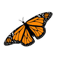 the butterfly as a symbol