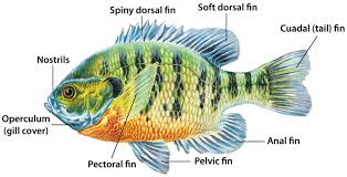 fish habits and habitat mdc hunting and fishing