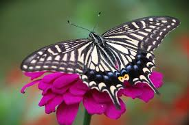 butterfly flower butterfly and flower stock photo image of butterfly 27122598