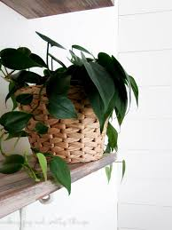 best low light house plants the perfect beginner houseplant for black thumbs