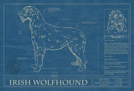 brushing a bedlington terrier irish wolfhound animal blueprint company