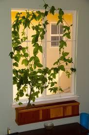 houseplant trellis 99 best urban garden images on pinterest gardening indoor