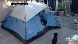 renting tents backyard tent renting for 899 month sums up everything that s