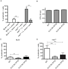 membrane damage during listeria monocytogenes infection triggers a