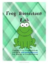 basic biology frog dissection laboratory ah the frog dissection