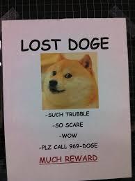 Doge Meme Pronunciation - lost doge funny to me pinterest doge and meme