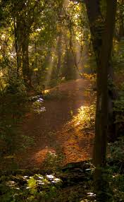 31 best dark forest images on pinterest dark forest landscapes