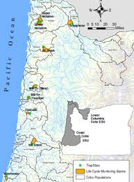 Esu Map Salmonids In The Lower Coos Watershed Partnership For Coastal