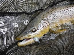 blog true north trout