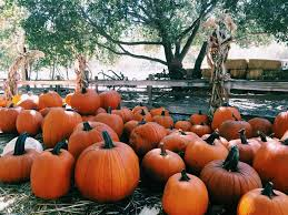 Pumpkin Patches In Bakersfield Ca by Santa Ana Pumpkin Patch Rio Rancho The Magnificent Seven 2016