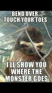 Sloth Meme Jokes - fancy 126 best sloth memes images on pinterest wallpaper site