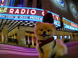 radio city music hall sammy and the city events things to do
