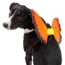 the 5 most adorable pet halloween costumes for 2013 becker